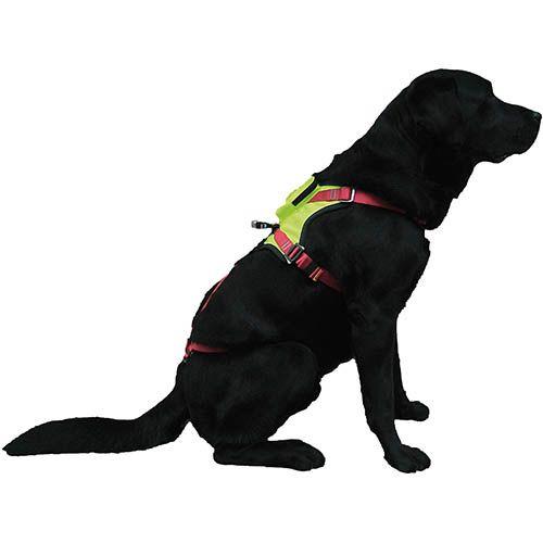 CAMP Kronos kutyahám kutyamentéshez
